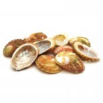Abalone Shell Rough 1-5cm (10 Pieces)