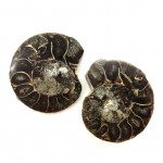 Ammonites Fossil Polished Cleoniceras sp Pair