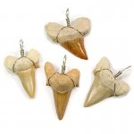 Shark Teeth Otodus Wire Wrapped 3-4cm